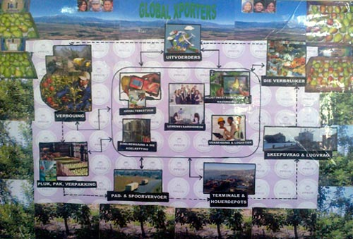 Sainsbury's Top of the Class groups' winning posters depicting the fruit supply chain